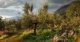 Messenische Landschaften