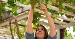 Weinanbau in Griechenland
